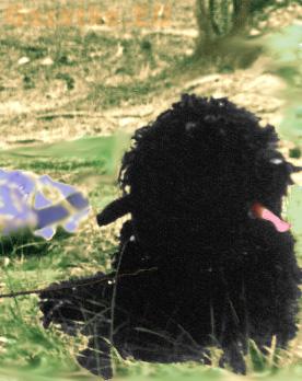 1980-06-do-przysiega-murzyn